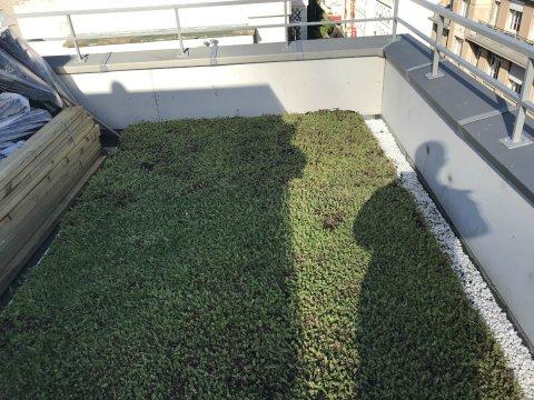 surélévation d'un immeuble parisien et création d'une toiture végétalisée à Paris